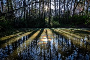 The early morning sun illuminates a pond on the walking trail through the Reynolda woods