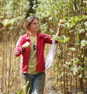 Natalie Sevin ('04) picks okra at Sugar Creek Farm