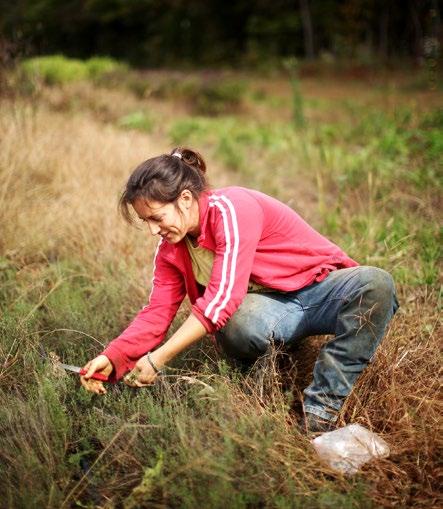 Natalie Sevin picks herbs.