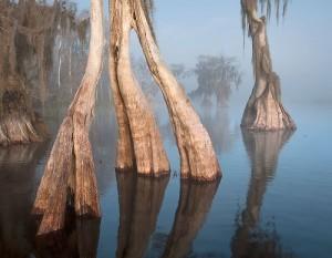 Lake Russell Cypress