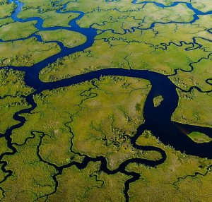 A view from the air of the Suwannee River delta.