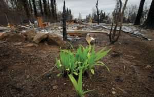 A plant blooms amid the ashes