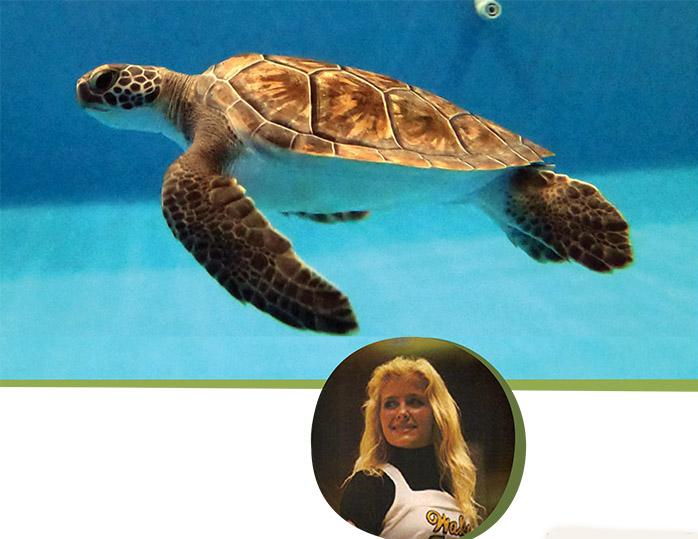 Karen Beasley Sea Turtle Rescue & Rehabilitation Center.