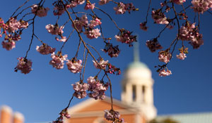 spring.photo