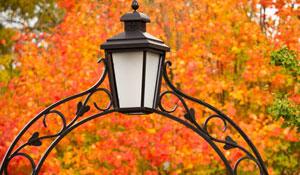 lantern.leaves.300x175