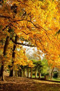 Fall leaves on the edge of Reynolda Gardens