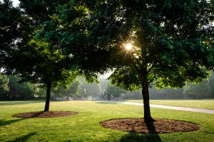 The sun rises behind trees lining Hearn Plaza