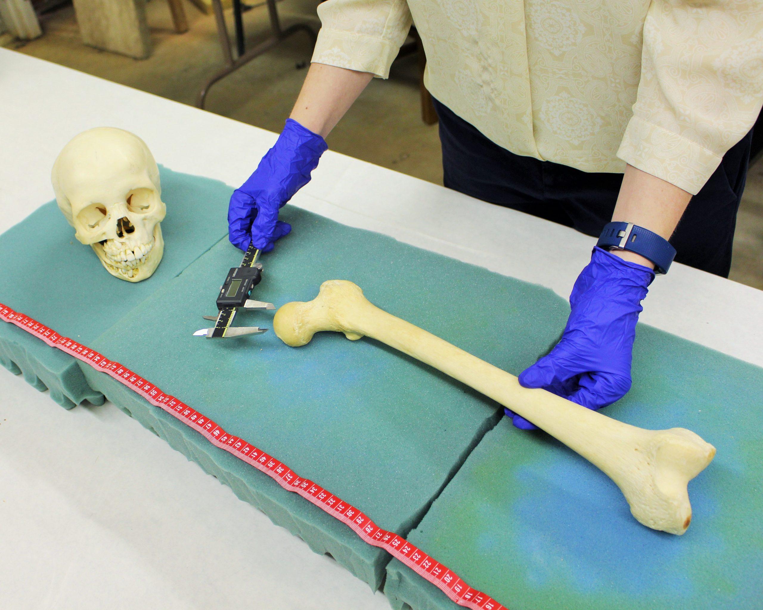 Measuring human skeletal remains
