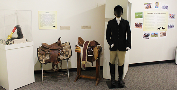 Horses and the Human Experience exhibit
