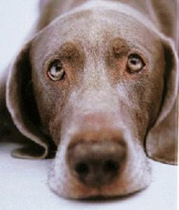sad-dog-256x300