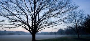 poteat-field-misty-morning