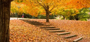 home-page-fall-3