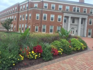 Flowers outside of Farrell Hall