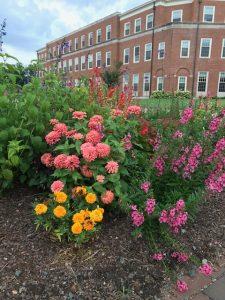 Flowers outside Farrell Hall
