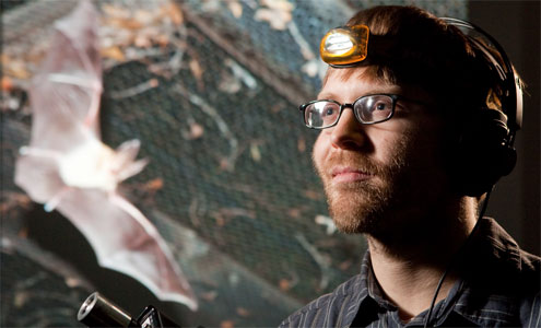 Biology graduate student Aaron Corcoran conducts research on bats and moths with professor William Conner. (Photo illustration by Ken Bennett.)