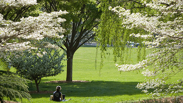Trees on Davis Field