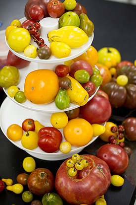 Tomatoes on display