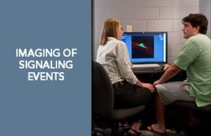 imaging signaling effects