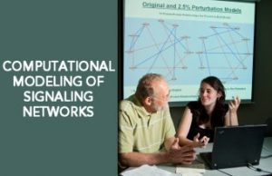computational modeling of signaling effects